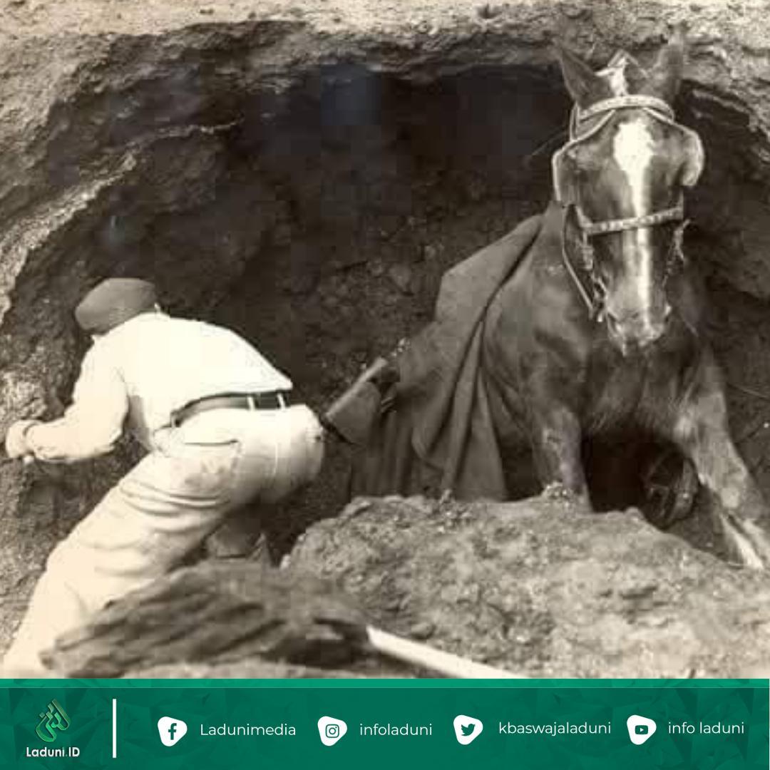 Kisah dari Seekor Kuda