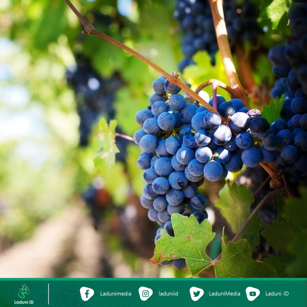 Kisah Legenda, Fabel Aesop: Rubah dan Anggur Masam